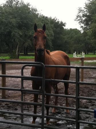 Justoutoftheblue retired racehorse ready for adoption through TROT
